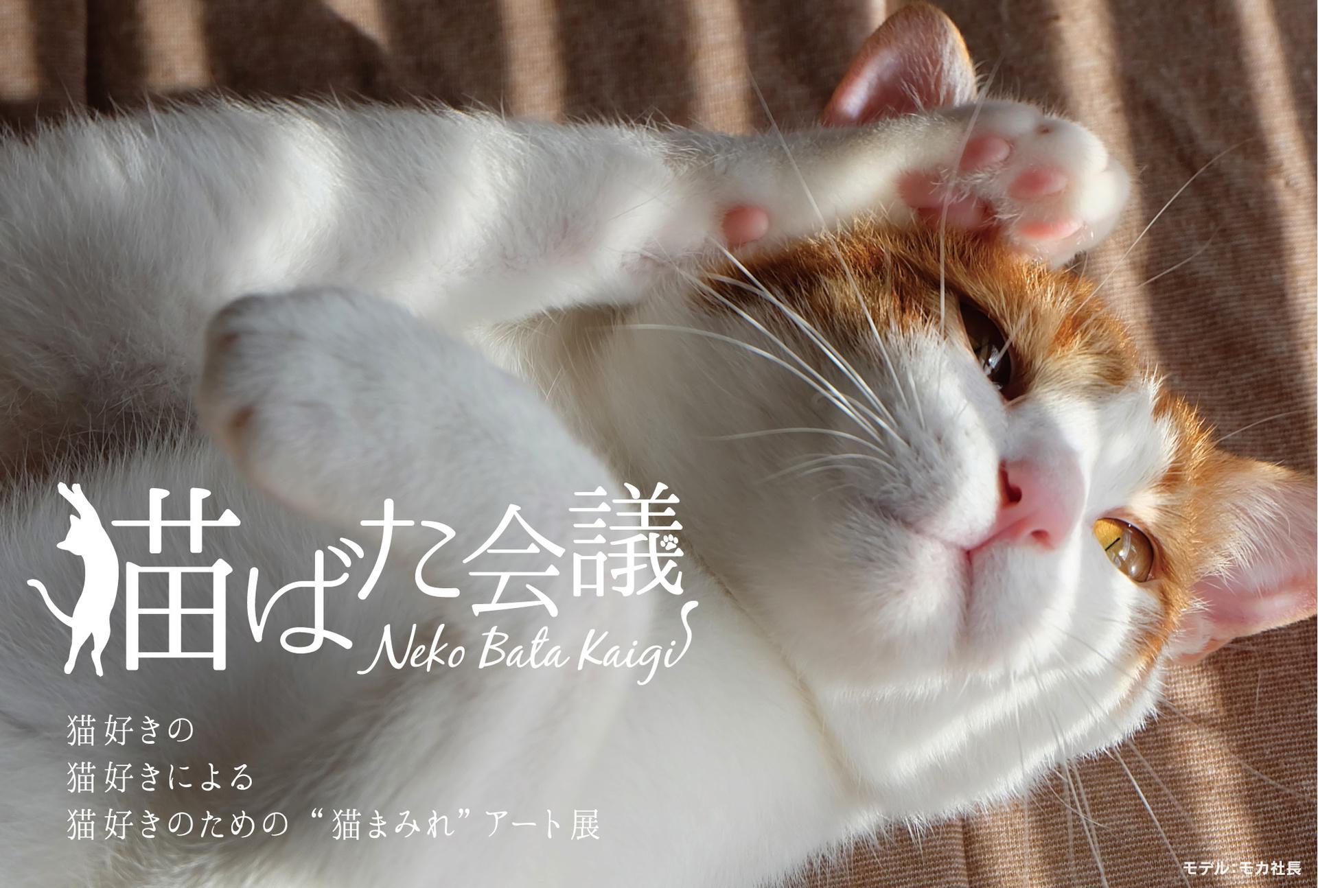 17.04_猫ばた会議DM_オモテ.jpg